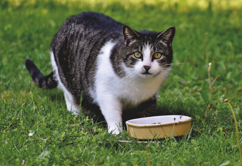 Karma mokra dla kota – jak wybrać?